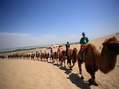 【城市滑报】骑骆驼去滑板-宁夏银川