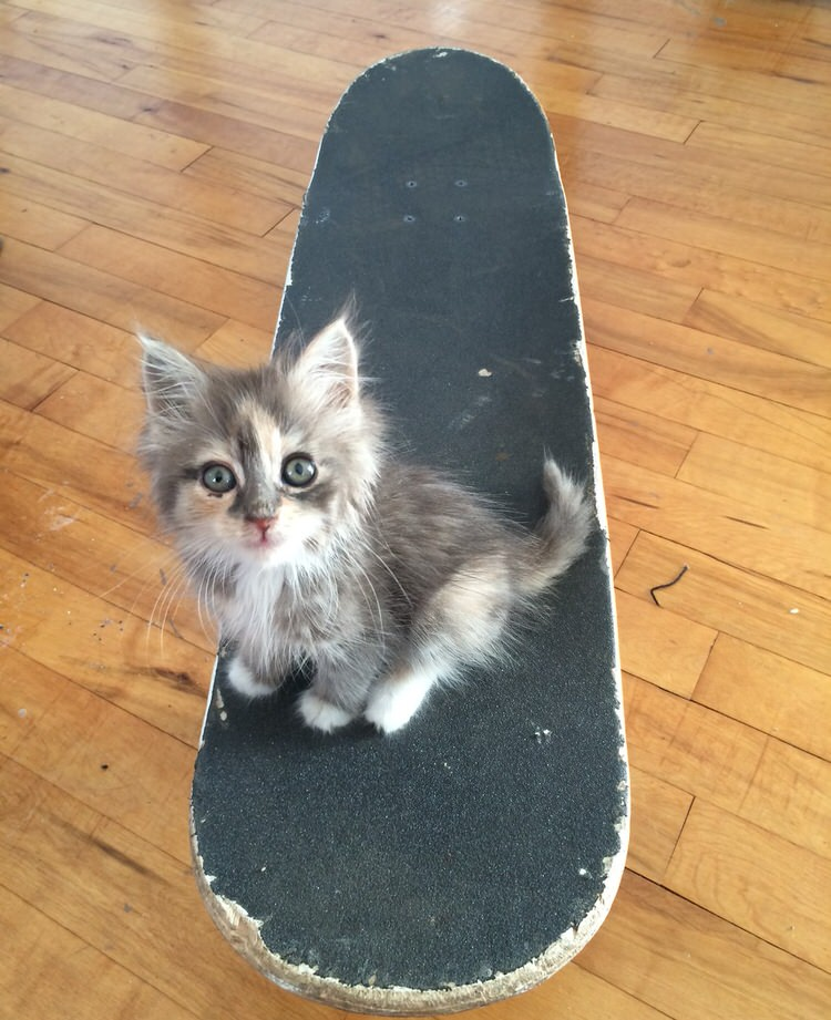 skateboarder-rescues-kitten-5