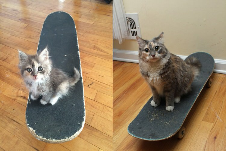 skateboarder-rescues-kitten-10