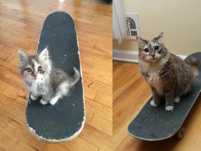 别人家的猫 比pro滑板还厉害