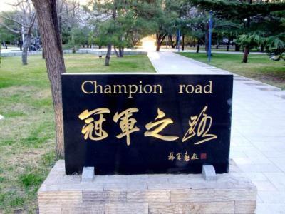 不拘一格 跨界选材——中国体育报专访北京体育大学曹卫东